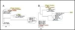 phylogenetic-tree
